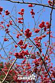 九族櫻花祭:IMG_3335.JPG