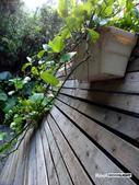 陽明山祕密花園:SAM_7575.JPG
