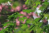 祕密花園:IMG_5944.JPG