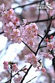 祕密花園:IMG_6045.JPG
