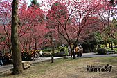 九族櫻花祭:IMG_3403.JPG