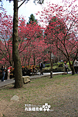 九族櫻花祭:IMG_3404.JPG