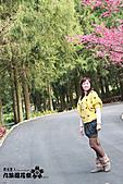 九族櫻花祭:IMG_3413.JPG