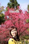 九族櫻花祭:IMG_3511.JPG