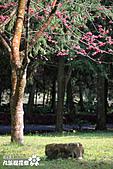 九族櫻花祭:IMG_3447.JPG
