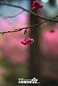 九族櫻花祭:IMG_3461.JPG