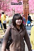 九族櫻花祭:IMG_3518.JPG