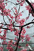 祕密花園:IMG_5948.JPG