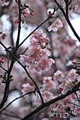 祕密花園:IMG_6048.JPG