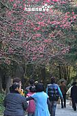 九族櫻花祭:IMG_3653.JPG