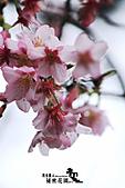祕密花園:IMG_6051.JPG