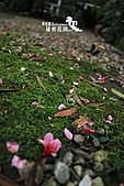 祕密花園:IMG_5984.JPG