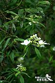 祕密花園:IMG_5964.JPG