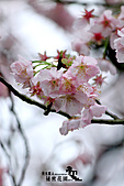 祕密花園:IMG_6052.JPG