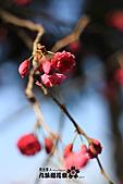 九族櫻花祭:IMG_3534.JPG