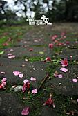 祕密花園:IMG_5985.JPG