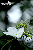 祕密花園:IMG_5965.JPG