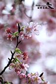 祕密花園:IMG_6058.JPG