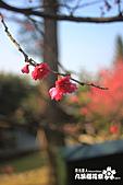 九族櫻花祭:IMG_3538.JPG