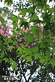 祕密花園:IMG_5889.JPG
