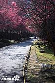九族櫻花祭:IMG_3546.JPG
