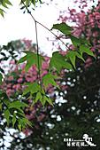 祕密花園:IMG_5890.JPG