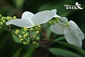 祕密花園:IMG_5967.JPG