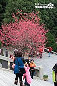 九族櫻花祭:IMG_3194.JPG