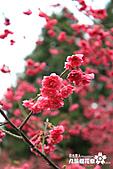 九族櫻花祭:IMG_3202.JPG