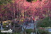 九族櫻花祭:IMG_3695.JPG