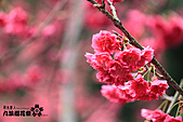 九族櫻花祭:IMG_3205.JPG
