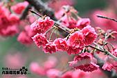 九族櫻花祭:IMG_3207.JPG