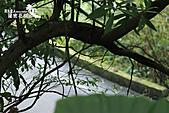 祕密花園:IMG_5970.JPG