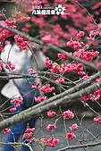 九族櫻花祭:IMG_3211.JPG