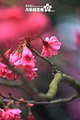 九族櫻花祭:IMG_3214.JPG