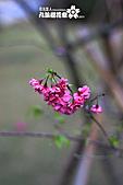 九族櫻花祭:IMG_3697.JPG