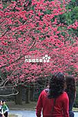 九族櫻花祭:IMG_3218.JPG