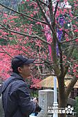 九族櫻花祭:IMG_3219.JPG