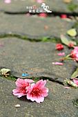 祕密花園:IMG_5929.JPG