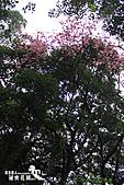 祕密花園:IMG_5893.JPG