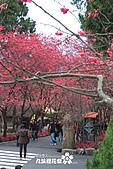 九族櫻花祭:IMG_3224.JPG