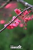 九族櫻花祭:IMG_3225.JPG