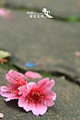 祕密花園:IMG_5931.JPG