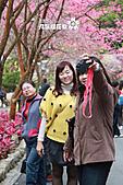 九族櫻花祭:IMG_3233.JPG