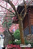 九族櫻花祭:IMG_3237.JPG