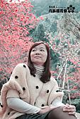 九族櫻花祭:IMG_3244.JPG