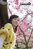 九族櫻花祭:IMG_3255.JPG
