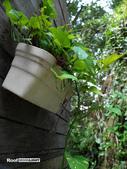 陽明山祕密花園:SAM_7574.JPG