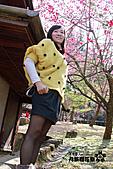 九族櫻花祭:IMG_3266.JPG