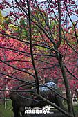 九族櫻花祭:IMG_3699.JPG